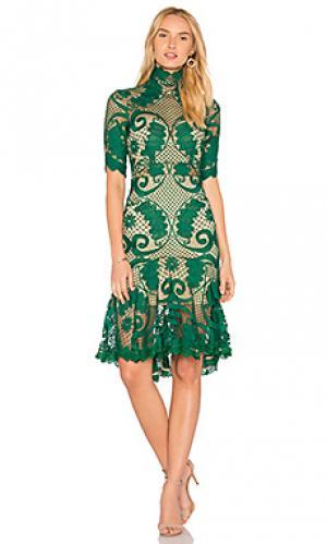 Кружевное платье babylon THURLEY. Цвет: зеленый