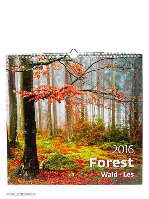 Календарь Forest (Лес) КОНТЭНТ. Цвет: белый