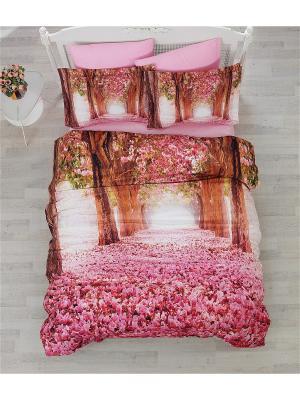 Постельное белье Cotton Box. Цвет: розовый, белый, зеленый, коричневый