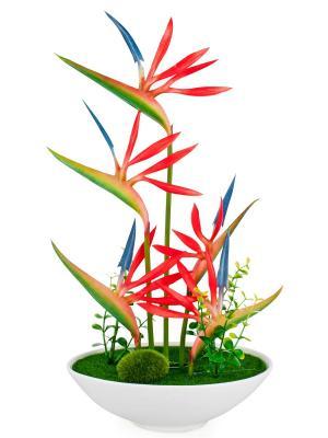 Композиция из цветов Петушиные гребешки Aztek. Цвет: зеленый, голубой, красный