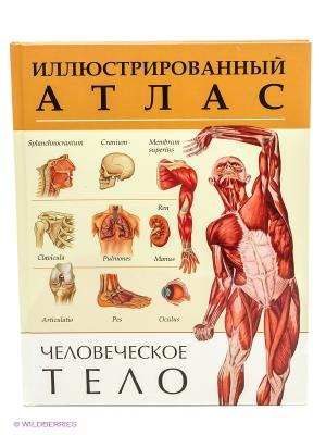 Человеческое тело. Иллюстрированный атлас Рипол-Владис. Цвет: белый