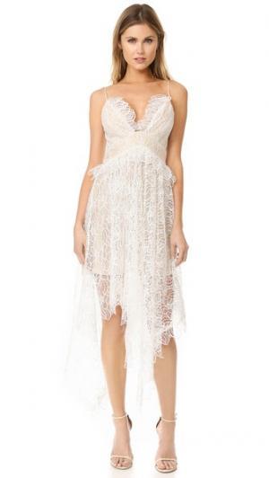 Кружевное платье Elane Acler. Цвет: золотой