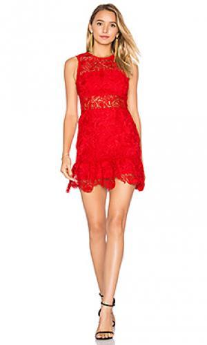 Кружевное мини-платье felicia Karina Grimaldi. Цвет: красный