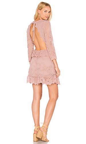 Мини платье magdalena valley Jens Pirate Booty Jen's. Цвет: фиолетовый