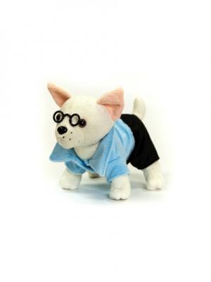 Мягкая игрушка Чихуа-хуа, мальчик Malvina. Цвет: белый