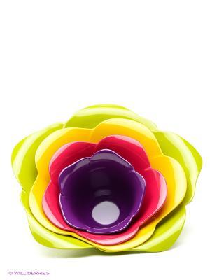 Набор мисок Zak!designs. Цвет: светло-зеленый, желтый, малиновый, фиолетовый