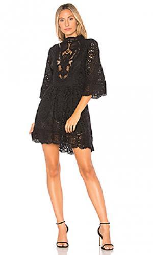 Мини платье victorian embroidered Nightcap. Цвет: черный