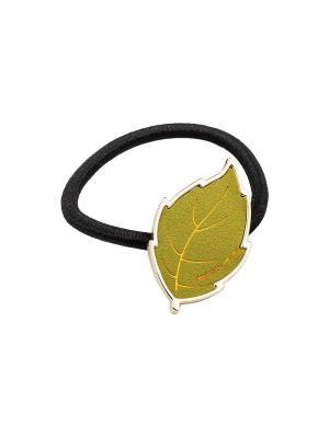 Резинка Kameo-bis. Цвет: зеленый, золотистый, черный