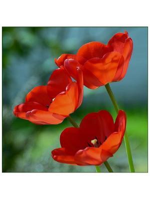 Декоративная наволочка Цветение Рапира. Цвет: красный, голубой, зеленый