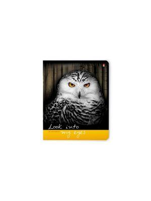 Тетрадь в клетку Дикие животные, 48 листов, 5 шт. Альт. Цвет: черный, оранжевый