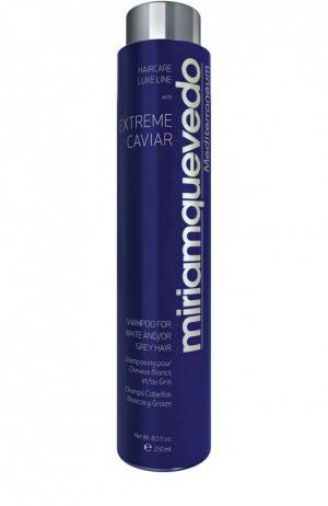 Шампунь для седых волос с экстрактом черной икры Miriamquevedo. Цвет: бесцветный