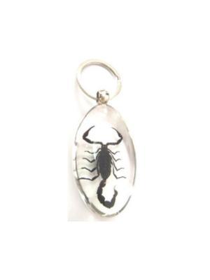 В Мире Насекомых Черный Скорпион Брелок L Склад Уникальных Товаров. Цвет: прозрачный