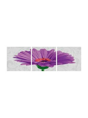 Триптих Гербера фиолетовый, 40х120 см, Schipper. Цвет: фиолетовый