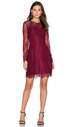 Кружевное платье shirley Greylin. Цвет: вишня