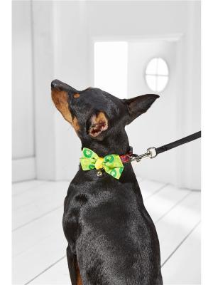 Текстильный ошейник с бабочкой для мелких пород собак весом до 6 кг и объемом шеи 18-26 см Nothing but Love. Цвет: желтый, красный, салатовый