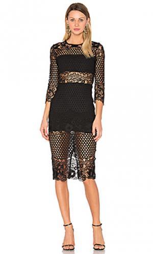 Кружевное платье shell Karina Grimaldi. Цвет: черный