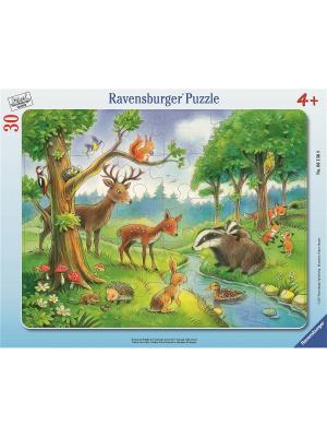 Пазл Лесные животные 30 шт Ravensburger. Цвет: синий