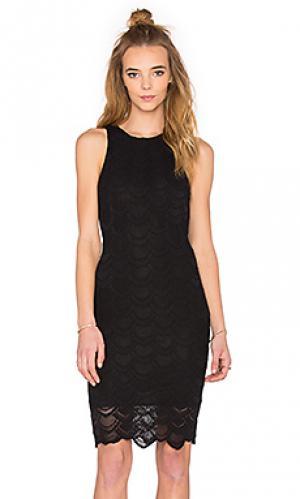 Мини платье victorian lace sports Nightcap. Цвет: черный