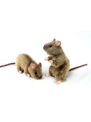 Крыса Hansa. Цвет: светло-коричневый