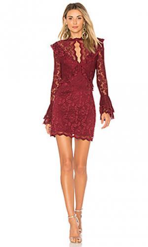 Мини платье devin SAYLOR. Цвет: красное вино