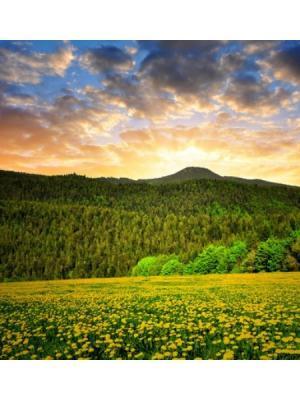 Картина Баварский лес Ecoramka. Цвет: зеленый, бирюзовый, светло-оранжевый