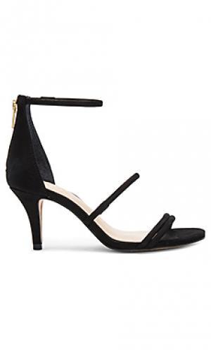 Обувь на каблуке aviran Vince Camuto. Цвет: черный