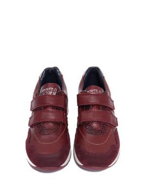 Ботинки U.S. Polo Assn.. Цвет: бордовый