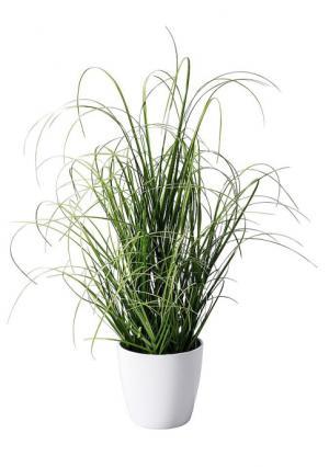 Декоративное растение Heine Home. Цвет: зеленый/белый