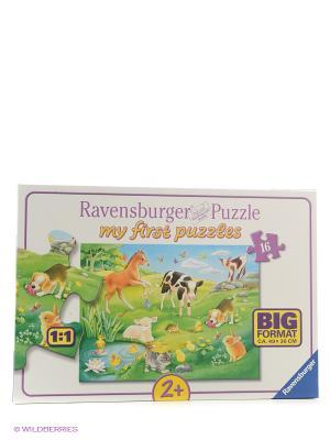 Пазл Малыши животных на лугу  16 шт Ravensburger. Цвет: зеленый