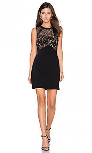 Кружевное платье cynthia Greylin. Цвет: черный