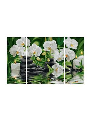 Триптих цветы  Wellness-Oase, 50х80 см, 1/6 Schipper. Цвет: белый, зеленый
