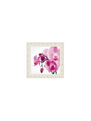 Орхидея В963 Картина в раме 15х18 PROFFI. Цвет: розовый, белый