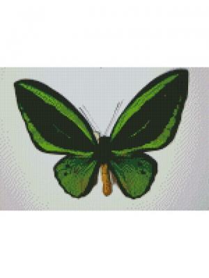Алмазная мозаика Бабочка Орнитоптера приам Цветной. Цвет: белый
