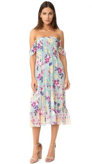 Платье Delfina Piamita. Цвет: растительность celeste