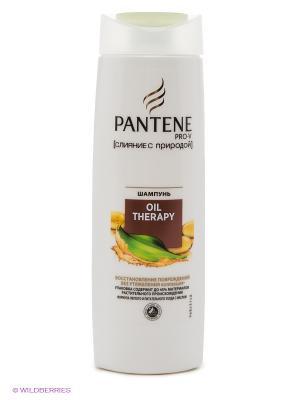 Шампунь, Oil Therapy, слияние с природой PANTENE. Цвет: бежевый