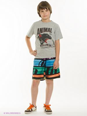Бордшорты Animal. Цвет: черный, синий, оранжевый