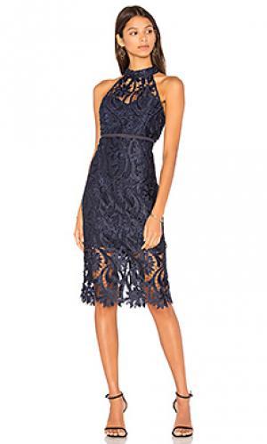 Кружевное платье isa Bardot. Цвет: синий