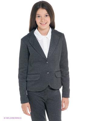 Пиджак SILVER SPOON. Цвет: серый