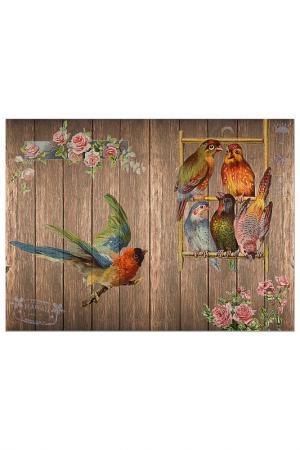 Репродукция Гавайские попугаи Glambers. Цвет: мультицвет