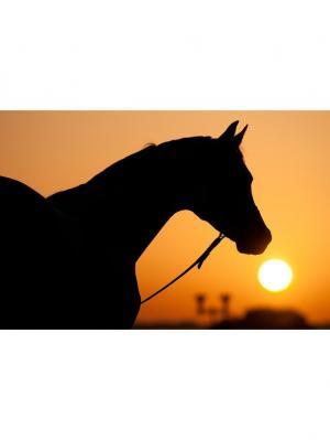 Картина лошадь Ecoramka. Цвет: черный, светло-оранжевый