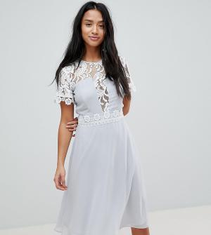 Elise Ryan Petite Платье миди со вставками и кружевной отделкой. Цвет: серый