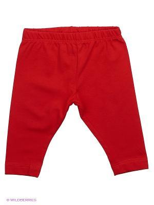 Леггинсы Mini Midi. Цвет: красный