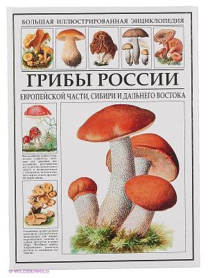 Грибы России Издательство СЗКЭО. Цвет: белый