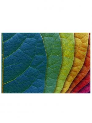 Обложка для проездного Листья Tina Bolotina. Цвет: синий, зеленый, красный, оранжевый