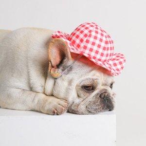 1шт Шляпа для домашних животных случайного цвета SHEIN. Цвет: многоцветный