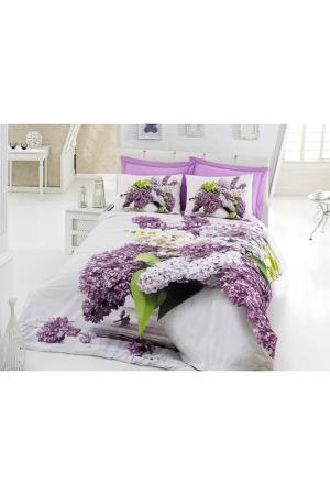 Комплект постельного белья Cotton box. Цвет: multicolor