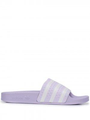 Шлепанцы Adilette adidas. Цвет: фиолетовый