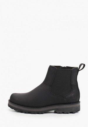 Ботинки Timberland Courma Kid Chelsea. Цвет: черный